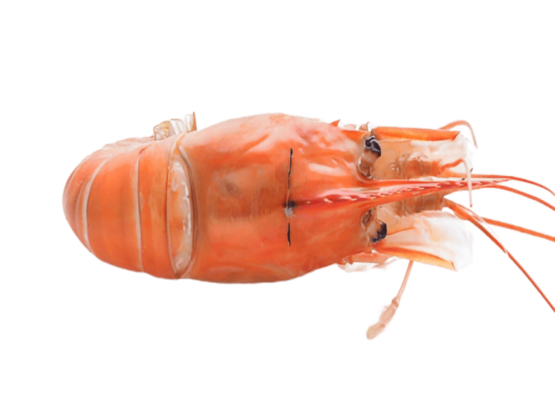 FW Scampi raw Head On Cooked
